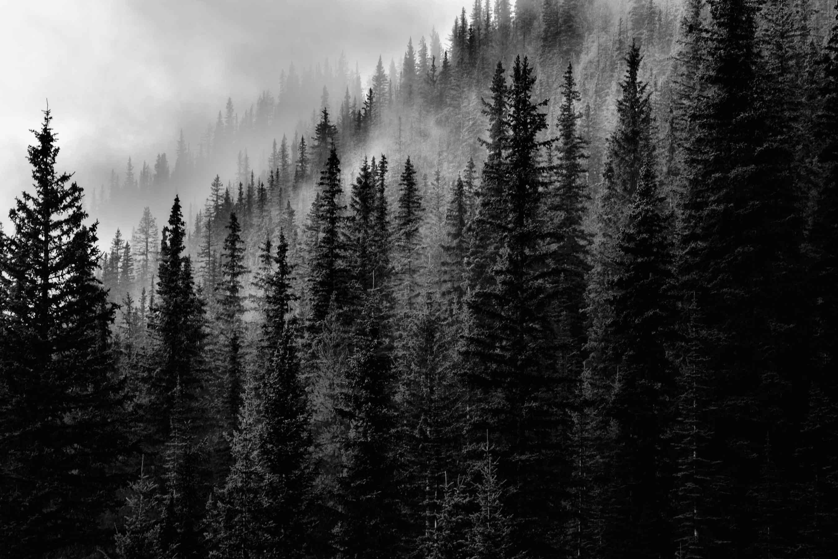 black wood. 2016. Blackwood Black Wood