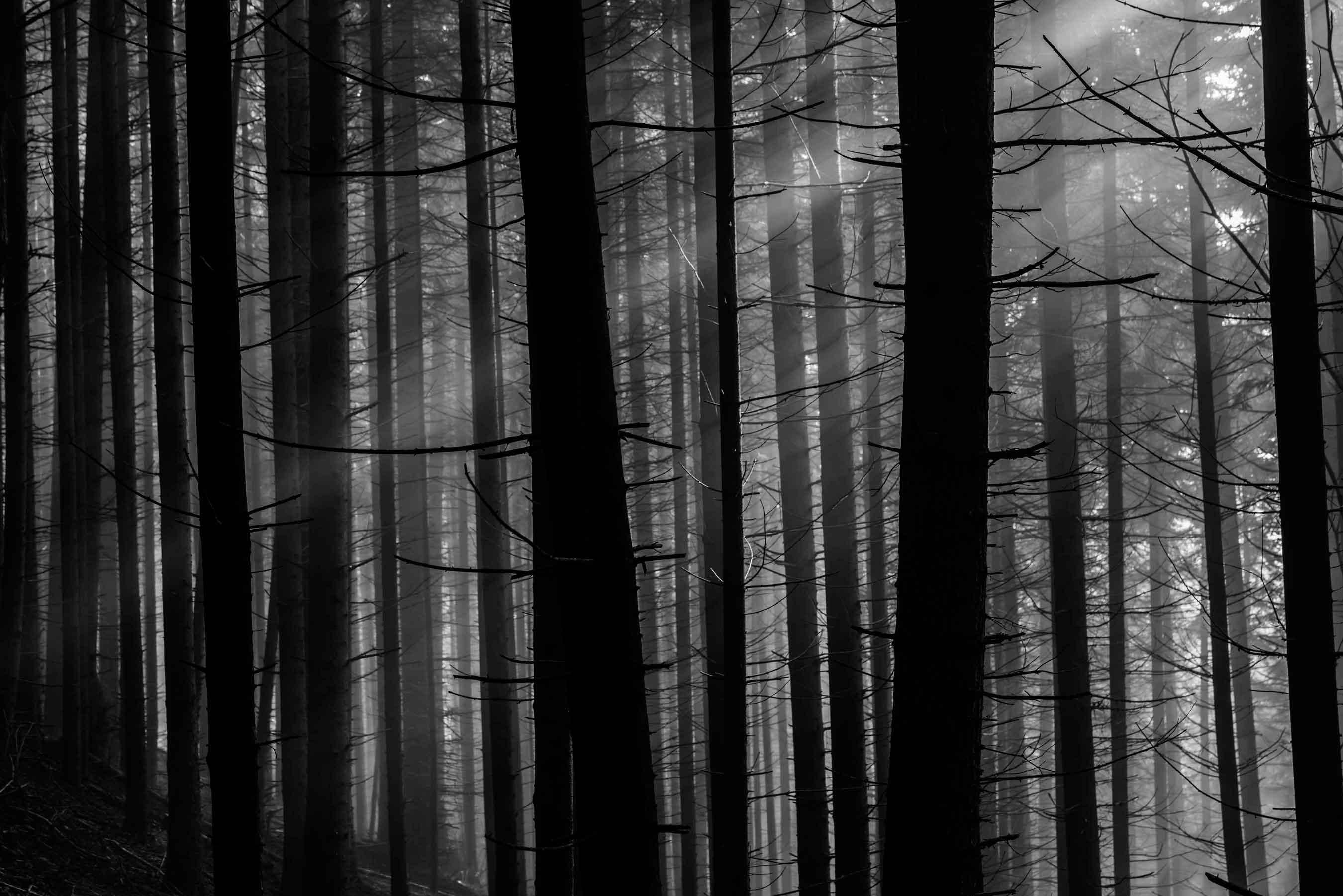 black wood. Commitment Black Wood